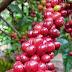 Produtores de café de Rondônia solicitam ao Ministério da Economia criação de entidade ao setor