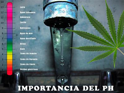 ph cannabis