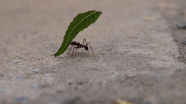 formiche-casa-rimedi-eliminare formiche