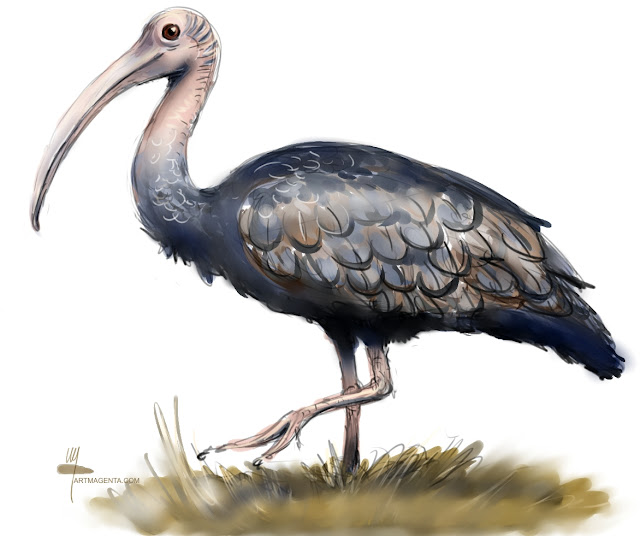 Giant ibis bird painting by Artmagenta