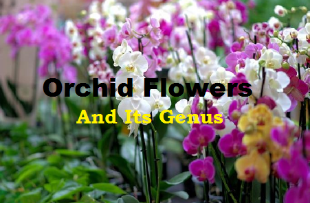 Orchid Flower Plants Image