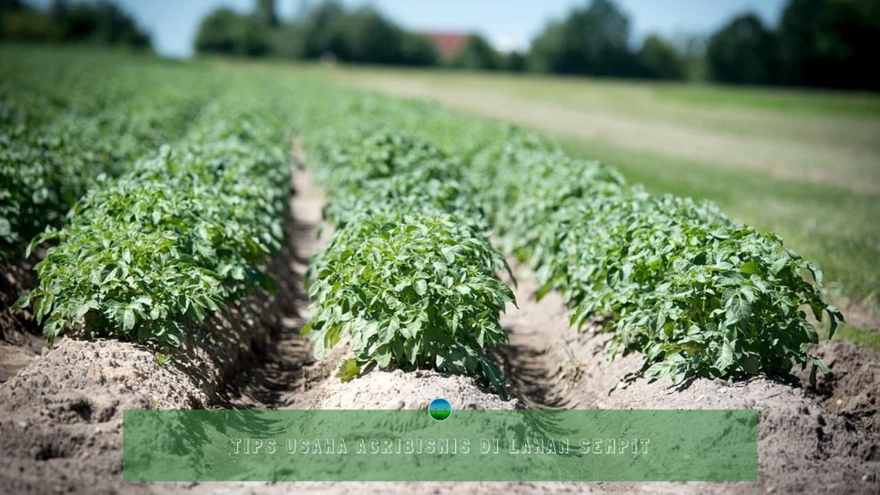Tips Usaha Agribisnis di Lahan Sempit