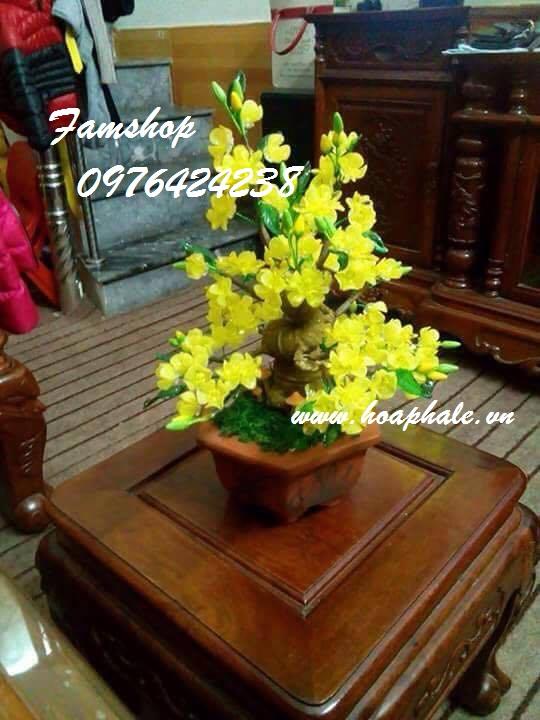 Goc bonsai cay hoa mai o Do Hanh