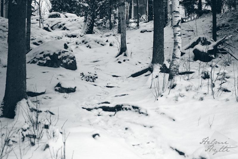 talvi-kuvia