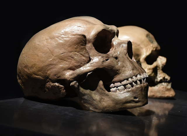 Shift in scientific consensus about demise of Neanderthals