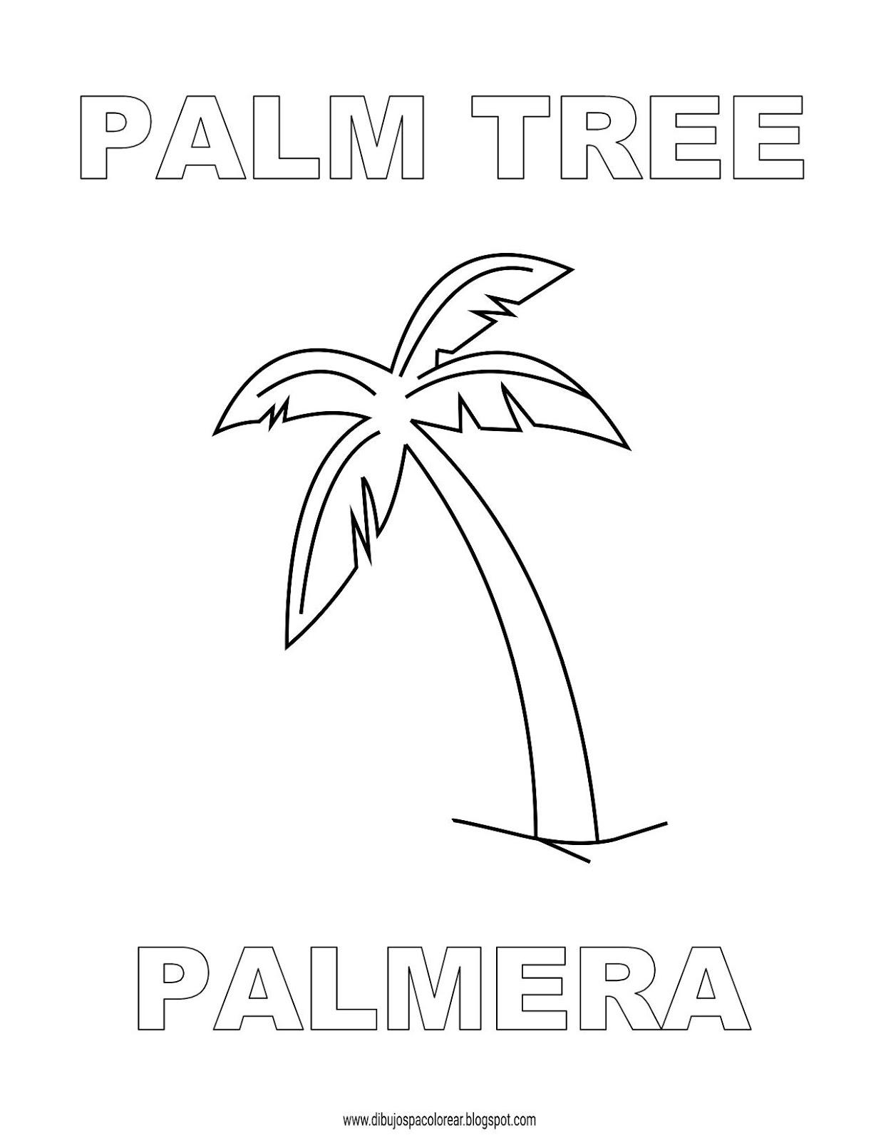 Dibujos Inglés Español Con P Palm Tree Palmera