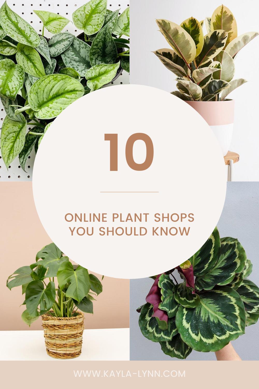 10 Online Plant Shops You Should Know Pinterest Image