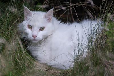 Penyakit Kucing Anggora