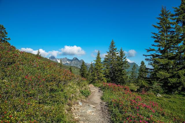 Panoramaweg Gantakopf  Wandern im Montafon 12