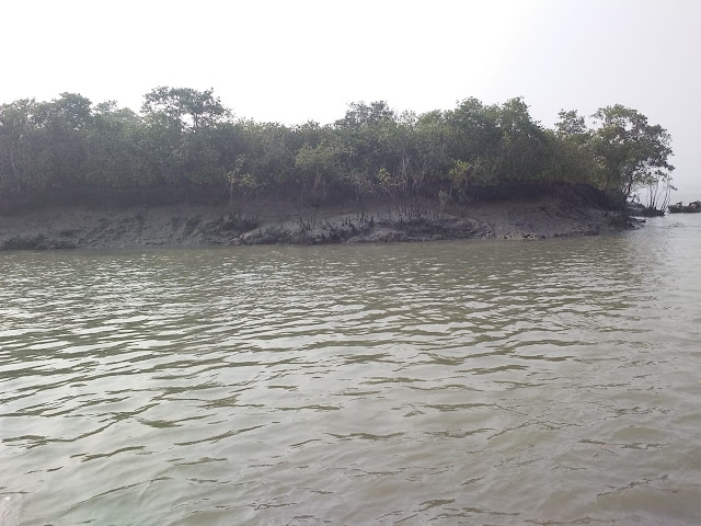 Mangrove forest in Sundarban