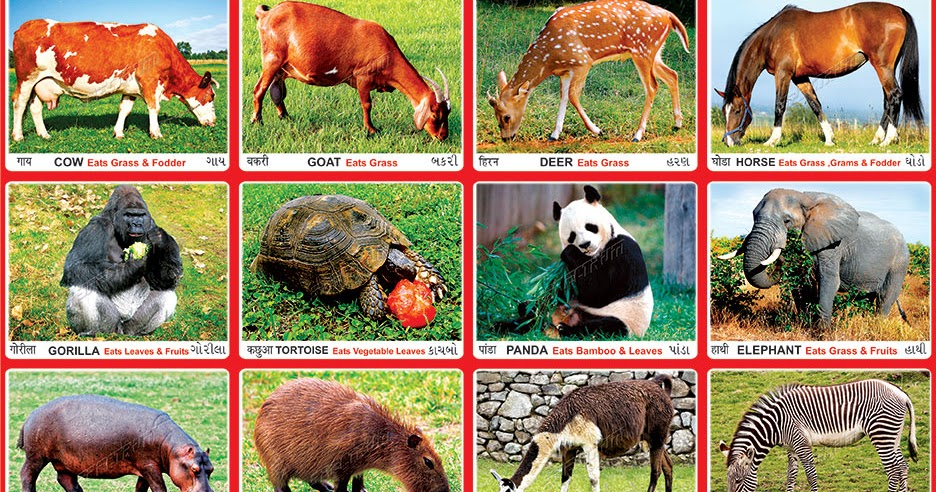 Spectrum Educational Charts: Chart 281 - Herbivorous Animals 1