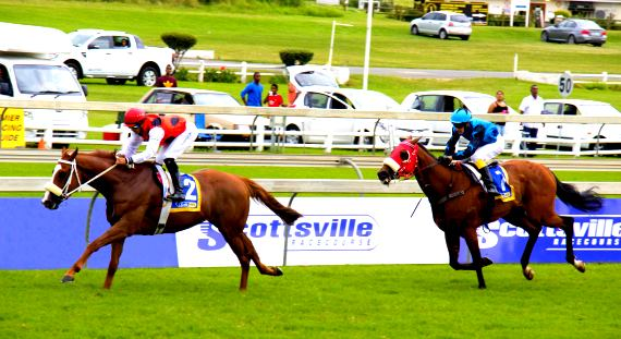 Image of Scottsville Race Course with Link to Hollywoodbets' Best Bets and Tips for Scottsville's racing on the 16th of October