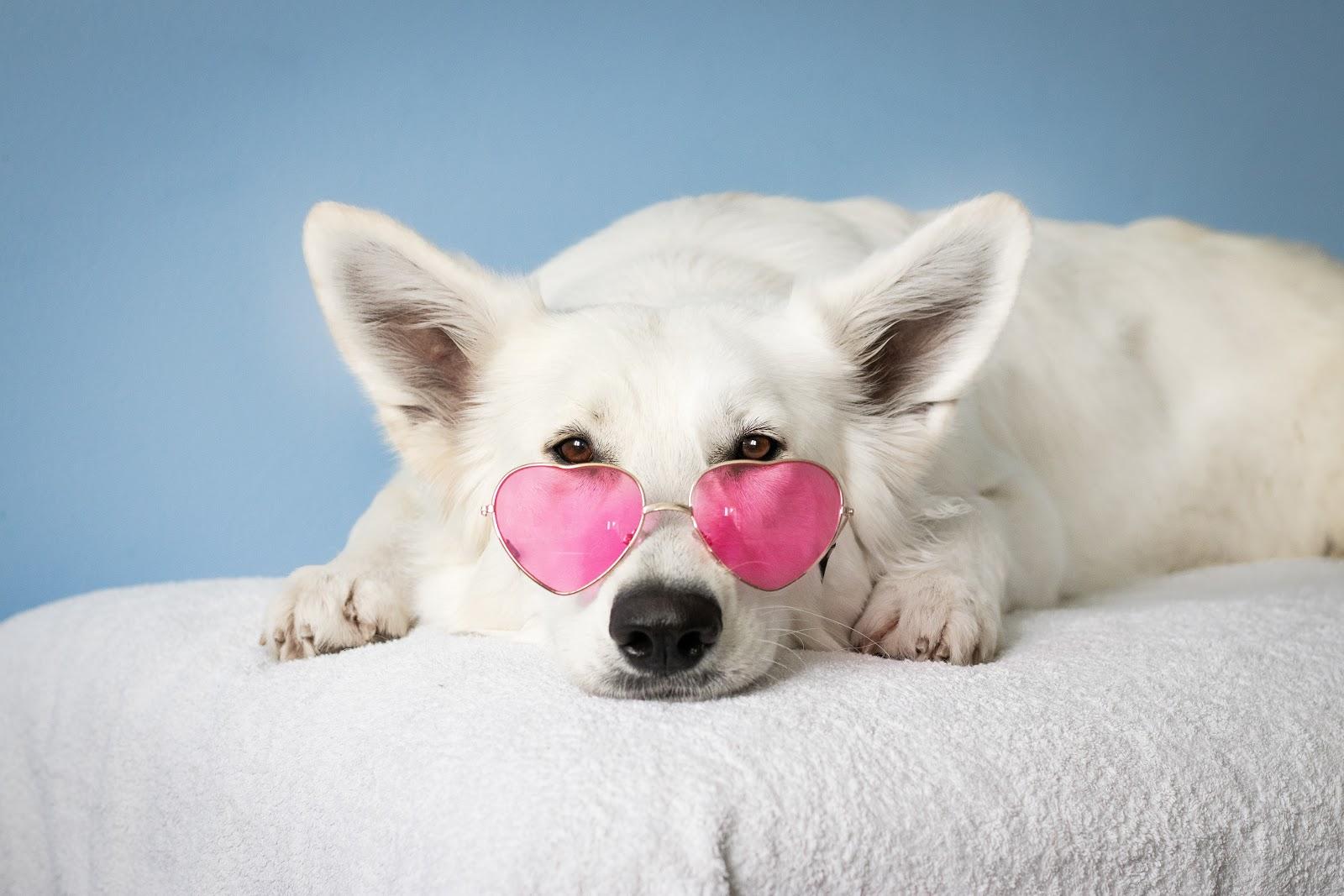 medium-short-coated-white-dog-on-white-textile-pictures