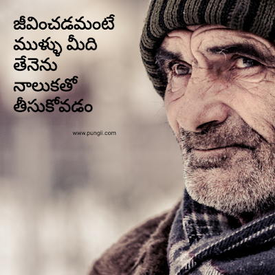 good morning quotes in telugu with good morning in telugu imaqges