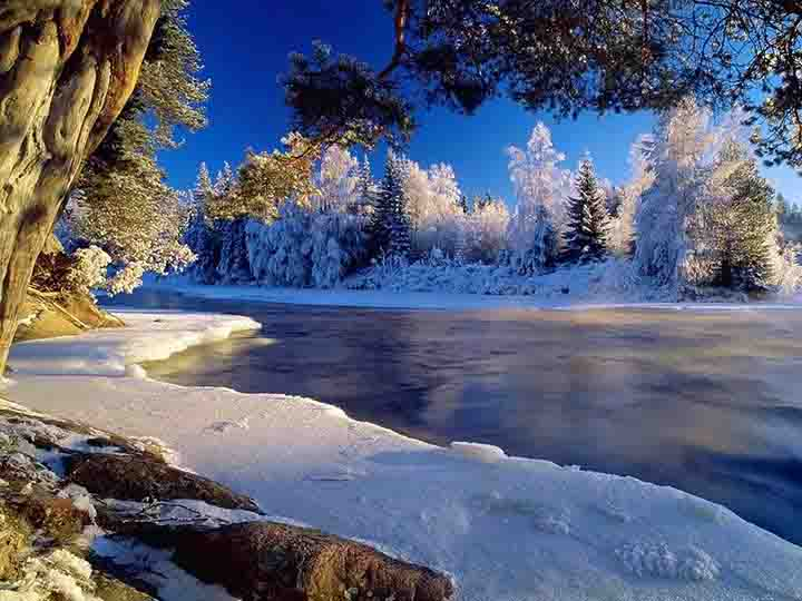 çam ağaçlarına yağmış kar manzaralı kış resimleri