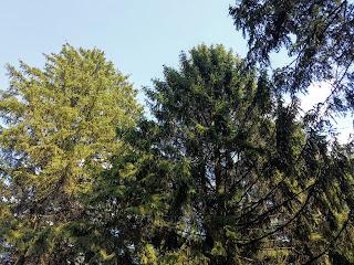 Графское. Великоанадольский лес