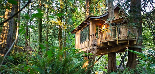 Casa en un árbol en medio de un bosque