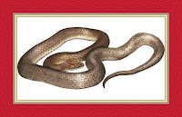Snake Dream Meaning and Interpretations – DREAMLAND