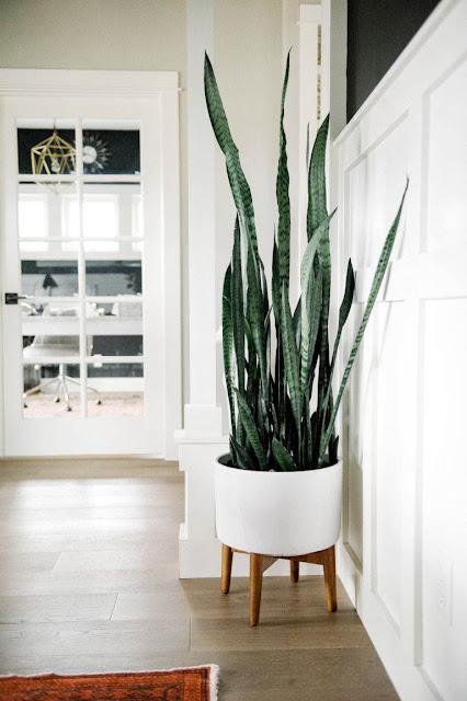 Designer Indoor Plant Pots
