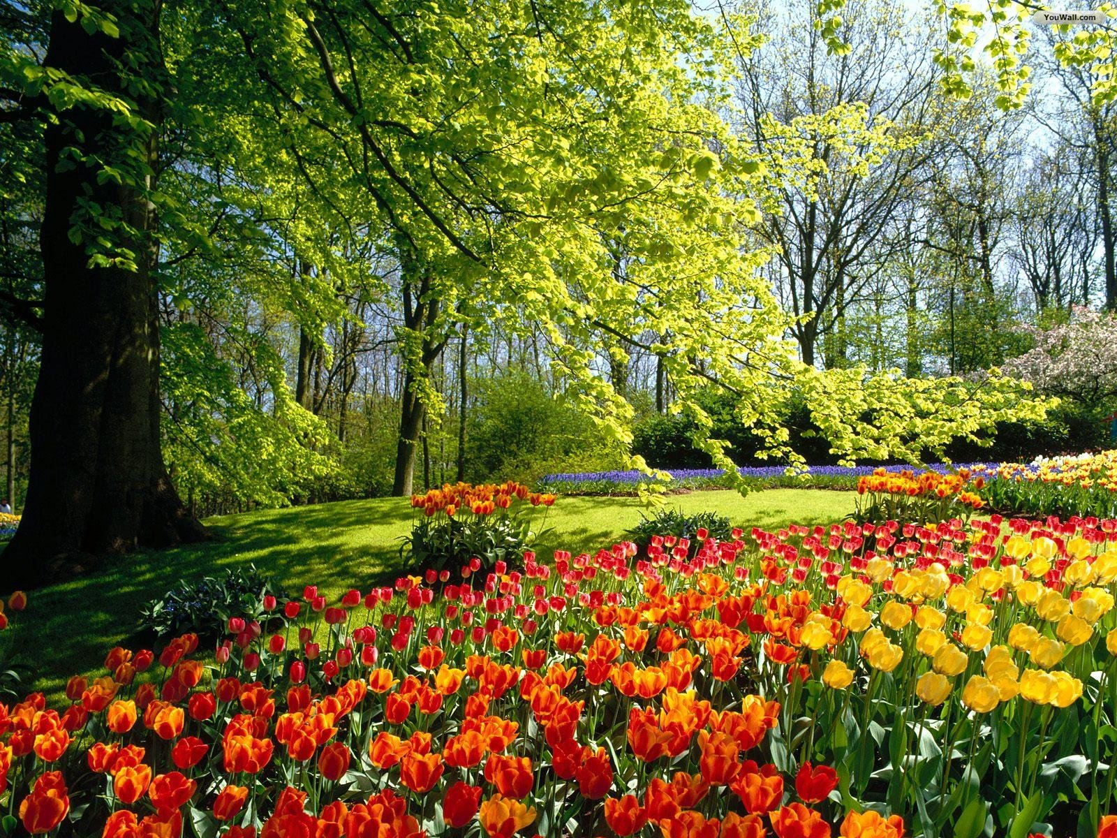 Free Desktop Wallpaper Background Spring Flower Gardens