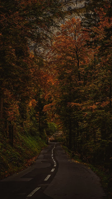 Road, path, trees, bushes, branches, autumn
