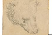 Gambar Kepala Beruang Da Vinci Ditaksir Bernilai Rp236 miliar
