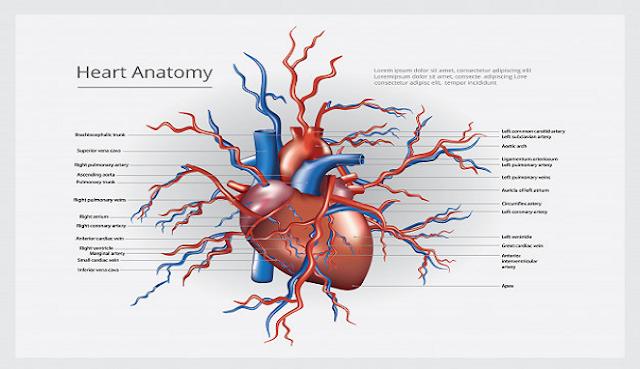 5 mitos dan fakta tentang serangan jantung