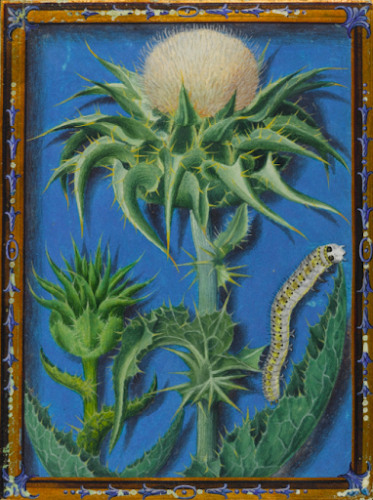 """Jacques Le Moyne de Morgues still life painting, """"A Thistle and a Caterpillar"""", circa mid C16th"""