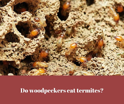 Do woodpeckers eat termites?