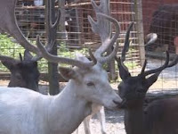 Baby elk and other animal babies at Deer Farm