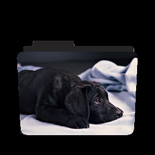 Cute Sad Dog Png Image