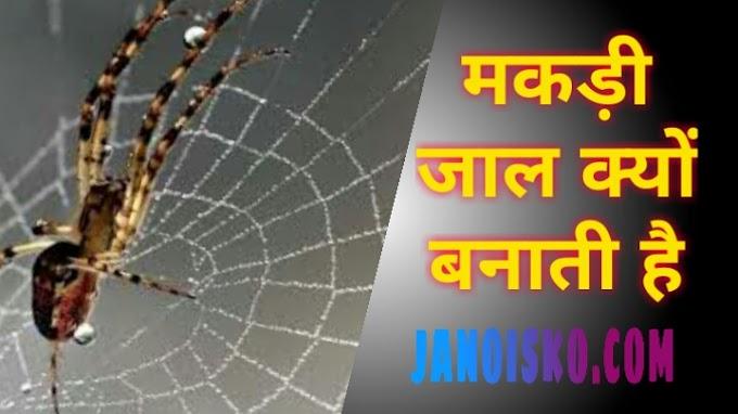 मकड़ी अपना जाल क्यों बनाती हैं । मकड़ी  जाल कैसे बनाती है ?