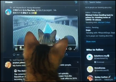 Funny kitty watching a video of a amazing cat driving a Formula One car