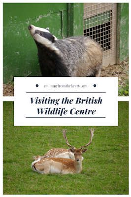 british wildlife centre pin
