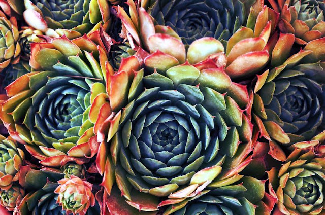 25 Trendy Types Of Succulents You Should Know About