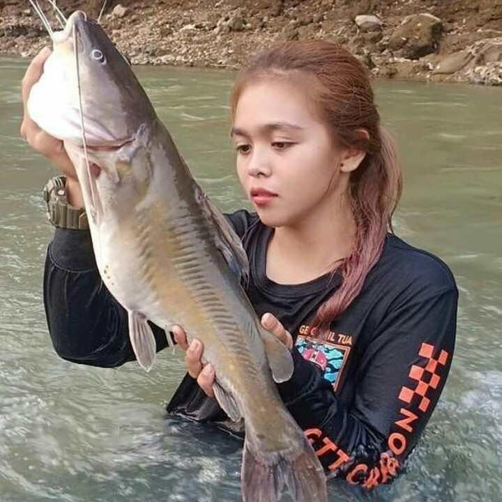 Umpan Mancing ikan Baung