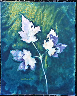 Wet cyanotype, Sue Reno, Image 38