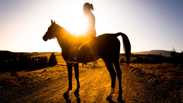 a horse and rider in the sunset