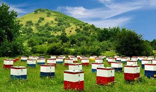 Τοποθέτηση μελισσοσμηνών σε Δημόσιες, Δημοτικές, Κοινοτικές εκτάσεις.
