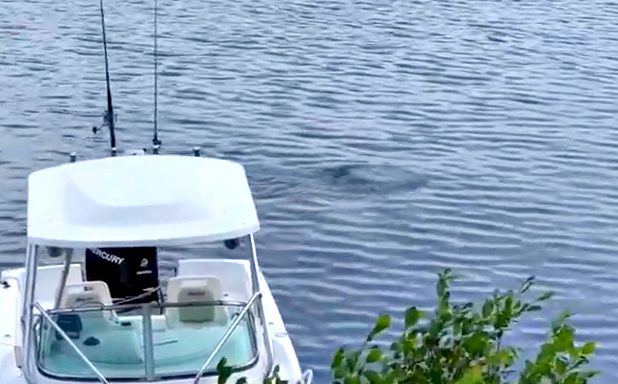 Water UFO Seen In New Hampshire Lake Baffles Eyewitness %25D0%259D%25D0%259B%25D0%259E%252C%2BGalaxy%252C%2B%25D8%25AC%25D8%25B3%25D9%2585%2B%25D8%25BA%25D8%25A7%25D9%2585%25D8%25B6%252C%2BUFO%252C%2BUFOs%252C%2BNFL%252C%2Bsighting%252C%2Bwar%252C%2B%252C%2Bsightings%252C%2BCarina%252C%2BNebula%252C%2Bblue%252C%2BHeineken%252C%2BStar%2BTrek%252C%2BStargate%252C%2Btop%2Bsecret%252C%2BET%252C%2Bvillager%252C%2Batlantis%252C%2BW56%252C%2BSteve%252C%2BGod%252C%2Bqueen%252C%2Bart%252C%2Binsect%252C%2BNibiru%252C%2BAI%252C%2BCNN%252C%2BFox%252C%2BNBC%252C%2Bnews%252C%2Bnebula%252C%2B1