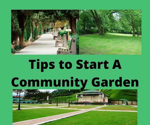 Tips To Start A Community garden