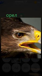 389 фото голова орла с желтым клювом 17 уровень