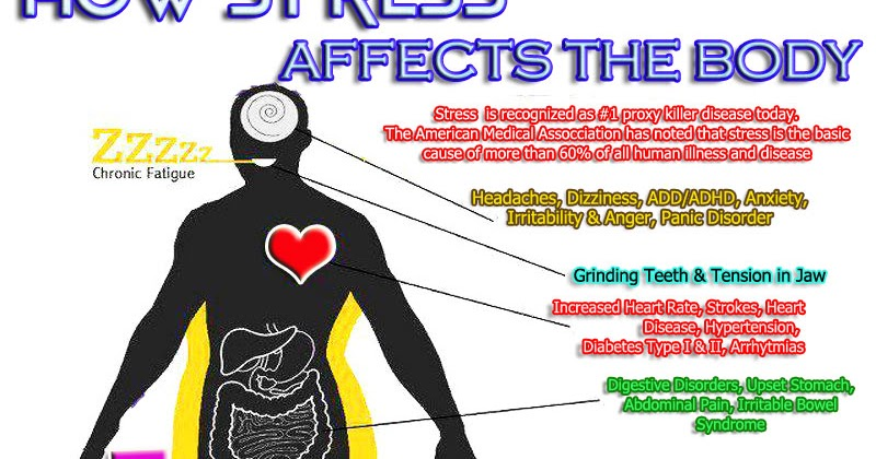 How Stress Affects Our Body - Samantha Luxton's Notes