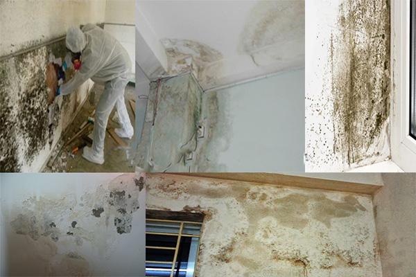 Thấm dột hư hỏng lớp sơn tường nhà