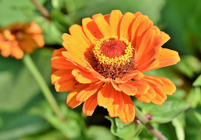 https://pixabay.com/pl/photos/cynia-kompozyty-kwiat-ro%C5%9Blin-3735604/