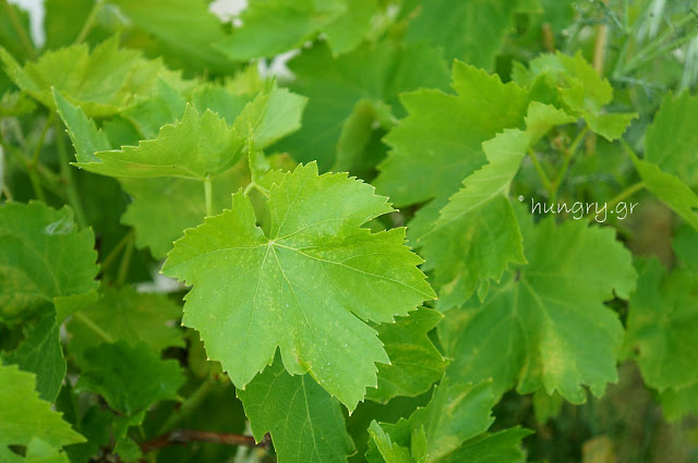 Vine Leaves Maintenance 2-DIY