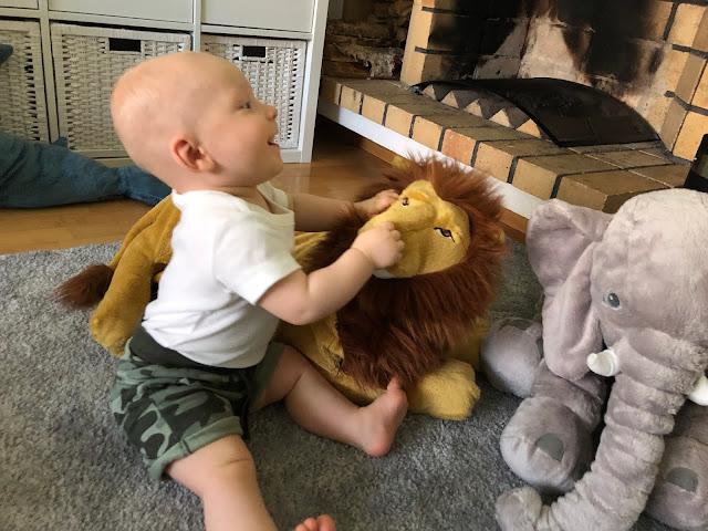Noelilla on kokonainen villieläintarha, mutta leijona on ykkössuosikki