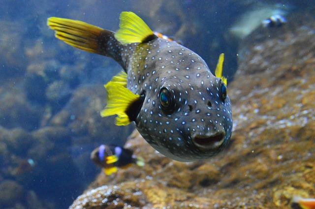 sea-animals, water-animals, aquatic-animals, ocean-animals, deep-sea-creatures