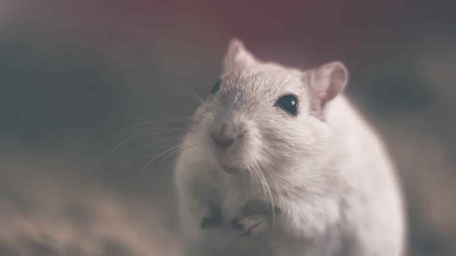 Man In China Dies After Testing Positive For Hantavirus