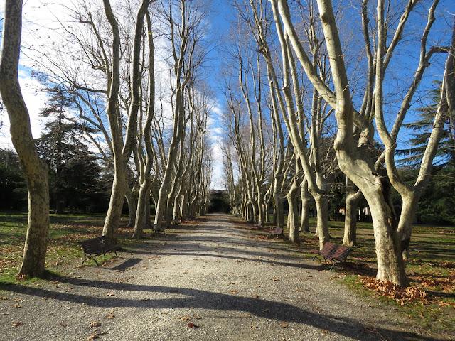 The trees of Villa Fabbricotti last December, Viale della Libertà, Livorno